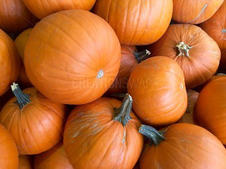 Orange Pumpkins   (72501)