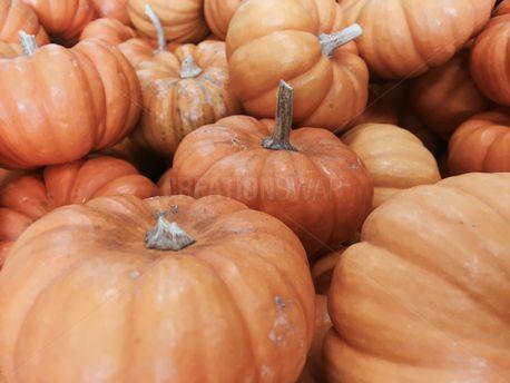 Mini Pumpkins  (72627)