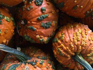 Funkey Pumpkins