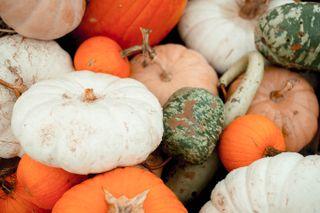 Bountiful Harvest 3