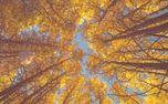 Fall Trees Loop (73172)