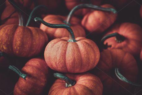 Pumpkins (73245)