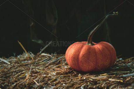 Pumpkin (73246)