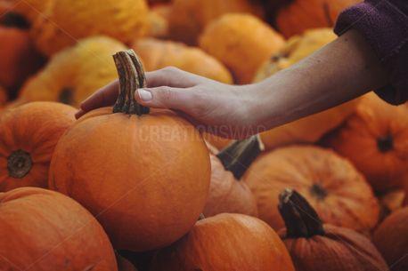 Picking Pumpkins (73253)