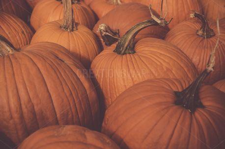Thanksgiving Orange Pumpkins (73267)