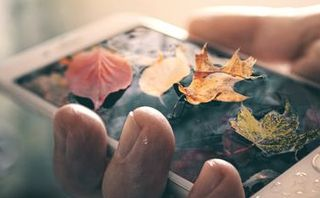 Fall leaves on a phone