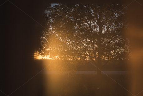 Sunset tree through a window (73766)