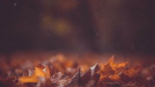 Fall Leaves Motion Loop