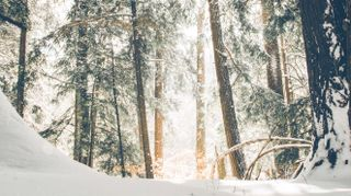 Winter Forest Motion Loop