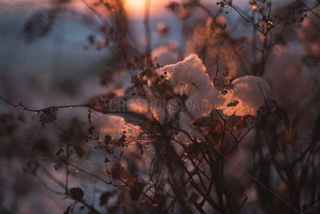 Sunshine and snow (74099)