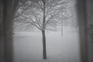Winter through a window