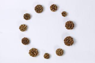 Circle of pine cones