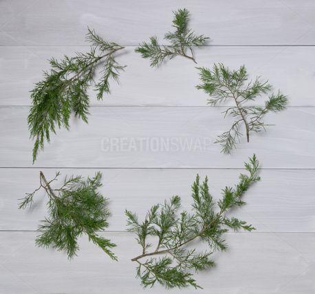 Cedar circle wreath (74463)