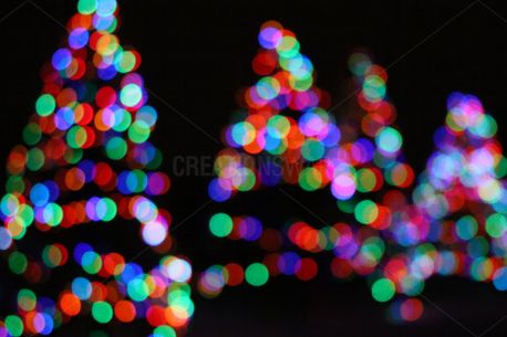 Christmas trees in the dark (74585)
