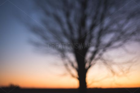 Tree background (75832)