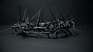 Crown of Thorns Loop