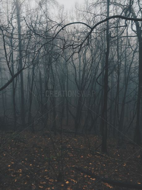 Foggy Forest (76994)