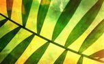 Palm Sunday Three (77265)