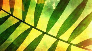 Palm Sunday Three