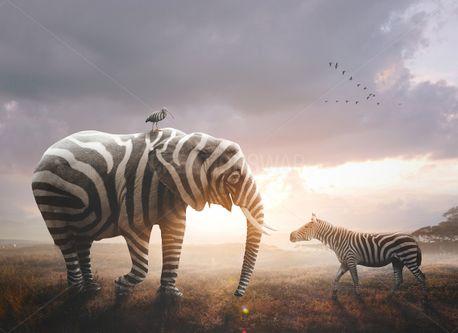 Elephant with zebra stripes (78129)
