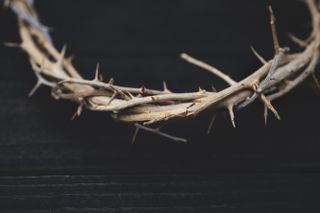 Upclose Crown of Thorns