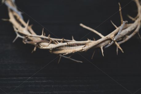 Upclose Crown of Thorns (78135)