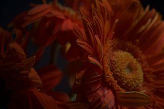 Orange Flower Up Close