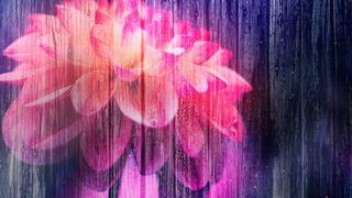 Floral Fusion Four