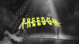 Freedom Stills