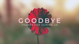 Daisy Goodbye