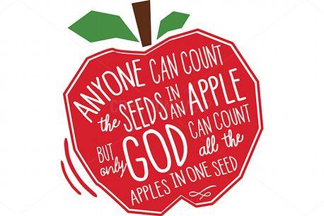 Seeds (79441)