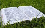 Open Bible on Grass (8061)
