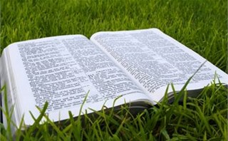 Open Bible on Grass