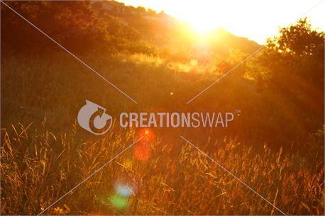 Grass Sunset (8260)