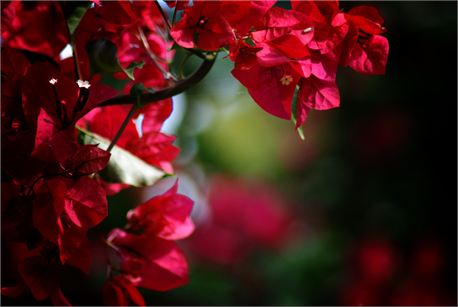 spring time (8576)