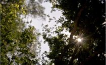 Light Through Tree