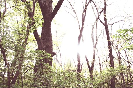 Trees and Sun (8984)