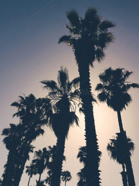 California Sunset (80004)