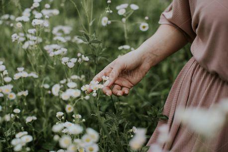 Flowers in a field (81505)