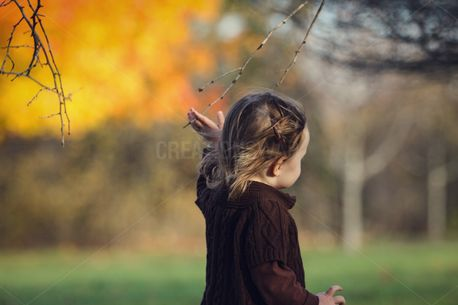 Toddler Walking in Fall (82427)