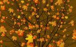 Golden Leaves Autumn Tree (82851)