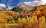 Autumn Goodbye Colorado Aspen (83001)