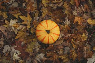 Yellow Pumpkin on Leaves