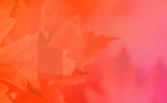 Autumn Leave Motion Background (83444)