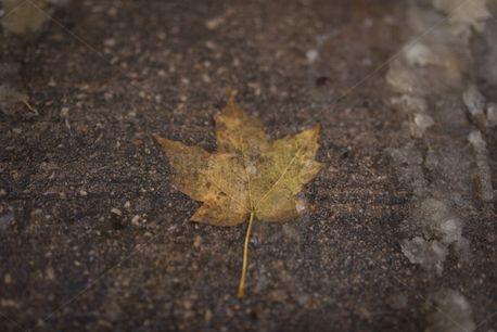 Flat leaf (83641)