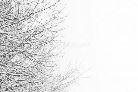 Winter Trees (83649)