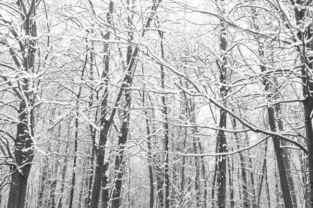 Winter Forest (83650)