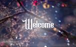 Christmas Bokeh Welcome (83993)