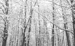 Winter Forest (84162)