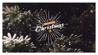 Merry Christmas - Snowy Pine